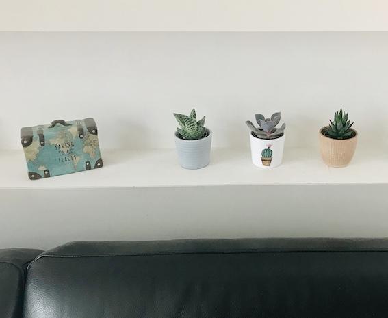 Arredare con le piante: Tris vasi del deserto