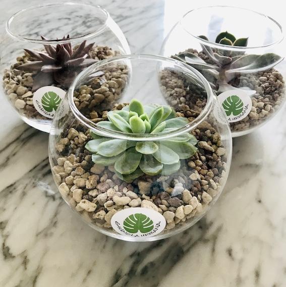 Arredare con le piante: Sfere del deserto