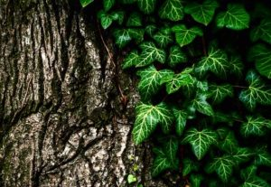 I cinque sensi delle piante: il tatto