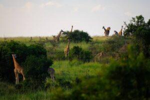 Africa: Grande Muraglia Verde