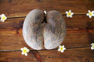 Coco de mer: seme più grande del mondo