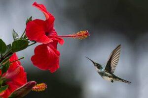 Fiore impollinatore