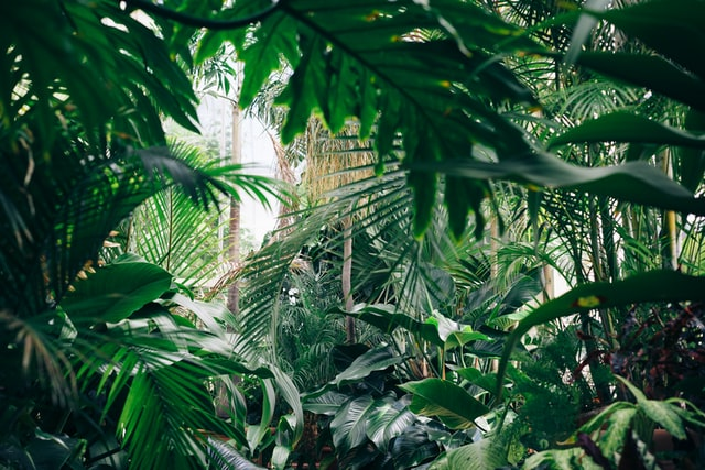 Foreste pluviali Costa Rica